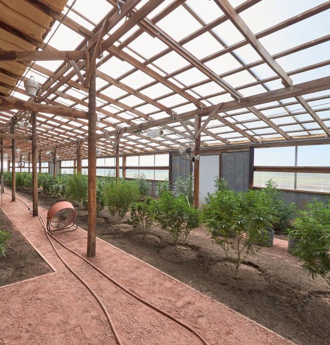 Theraone plant farm